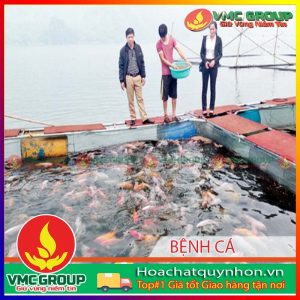mot-so-benh-thuong-gap-tren-ca-nuoi-long-be-tai-mot-so-tinh-mien-bac-va-bien-phap-phong-tri-ky-2-hcqn