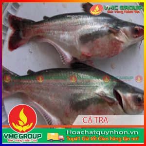 mot-so-benh-thuong-gap-va-cach-phong-tri-khi-nuoi-ca-tra-va-ca-basa-trong-be-hcqn